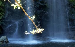 Spider waterfall Stock Photography