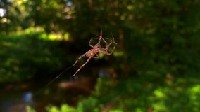 A spider weaves her net in the middle of the air with blurred background. A spider weaves her  net in the middle of the air with blurred background stock footage