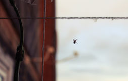 A spider weaves its invisible network. Little spider weaves a great trap for insects Stock Images