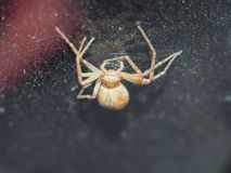 The spider weaves its web. Small arthropods. Close up royalty free stock image