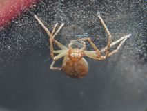 The spider weaves its web. Small arthropods. Close up stock images