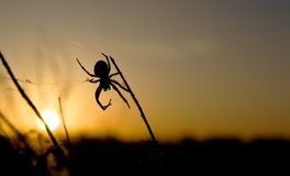 Spider weaves a web. The spider weaves a web against the background of the outgoing sun beyond the horizon stock images