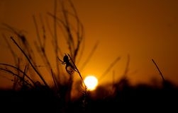 Spider weaves a web. The spider weaves a web against the background of the outgoing sun beyond the horizon stock photos