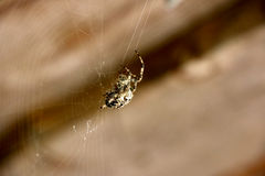 Spider weaves a web Stock Photography