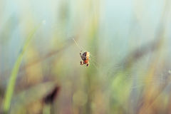 Spider weaves a web of on a green background Stock Photography