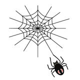 Spider weaves a web Royalty Free Stock Photo