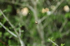 Spider. Weaving web Stock Photo