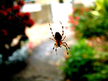 Spider On Web 1. This image of a spider I took outside my house when I spotted it one mourning whilst on the way to work stock photo