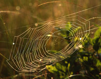 Spider Web 1. A spider web, with dew droplets, photographed in a meadow in the early morning Stock Photo