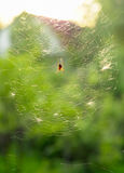 Spider in web. Spider and web in beams of hidden sun Stock Photography