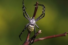 Spider and web. Spider in the web Royalty Free Stock Images