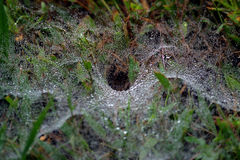 Spider Web. A detail shot of a spider web on a early spring morning Royalty Free Stock Image
