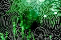 Spider web. Element of design royalty free stock image