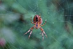 Spider in the web stock photos