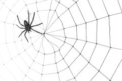 Spider Web. For background use Royalty Free Stock Photo