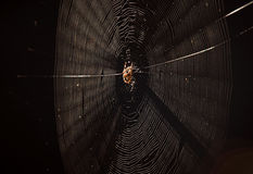 Spider in web. Closeup of spider in web, isolated on black background Royalty Free Stock Image