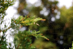 Spider web. Closeup with a spider web Stock Image