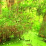 Spider Web. Transparent water drop on spider web in the forest Stock Photos