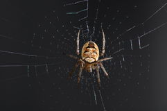 Spider in web. Macro view of spider in web with black background stock photo