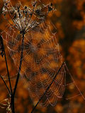 Spider web stock photos
