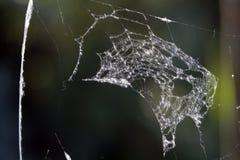 Free Spider Web Stock Photo - 14773930