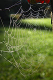 Spider web. Of an Araneid Spider with dew drops Stock Photos
