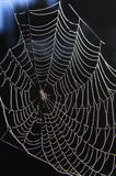 Spider web. Of an Araneid Spider with dew drops