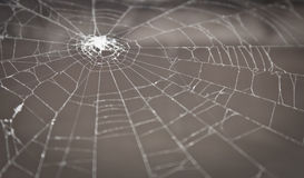 Spider web. On a grey background Royalty Free Stock Photos