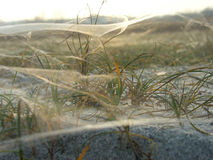 Spider web. On grassy dune late autumn stock photos