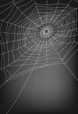 Spider web. Illustration, background with copy space Stock Photos