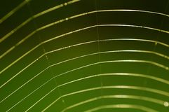 Spider web. On green background Royalty Free Stock Photography