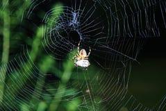 Spider web Royalty Free Stock Photos