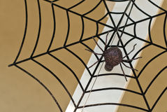 Free Spider Web Royalty Free Stock Images - 16400289