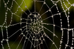 Spider web. With drop of water Royalty Free Stock Photos
