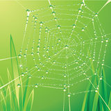 Spider web. With water drops Royalty Free Stock Images