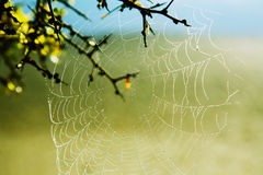 Spider web. Dew drops on a beautiful spider web in the early morning royalty free stock photos