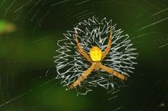 Spider on Web stock photos