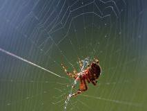 Spider Web 2 Royalty Free Stock Photography