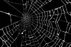 Free Spider Web Royalty Free Stock Photos - 20540098