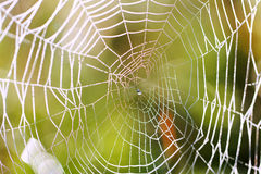 Spider web. Royalty Free Stock Photos