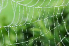 Free Spider Web Stock Photos - 21051663