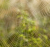 Spider web. Closeup of spider web with dew drops in the morning Stock Photos