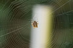 Spider in web. A spider in the center of its web Royalty Free Stock Images