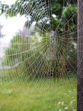 Spider Web. Covered with morning dew royalty free stock images