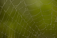 Spider web. Macro image of spider web with dewdrops on it Royalty Free Stock Photo