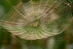 Spider in a web. Summer, sunny day Stock Images
