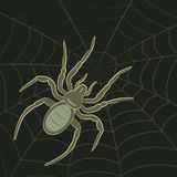 Spider on Web. Abstract Spider on Spiderweb, vector illustration Stock Photos