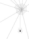 Spider Web. And spider on isolated white Royalty Free Stock Photography