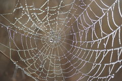 Spider Web. Morning Dew on a spider web Stock Photography