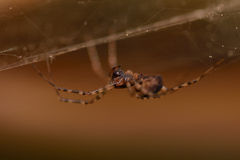 Spider in a web. In a darkness royalty free stock image